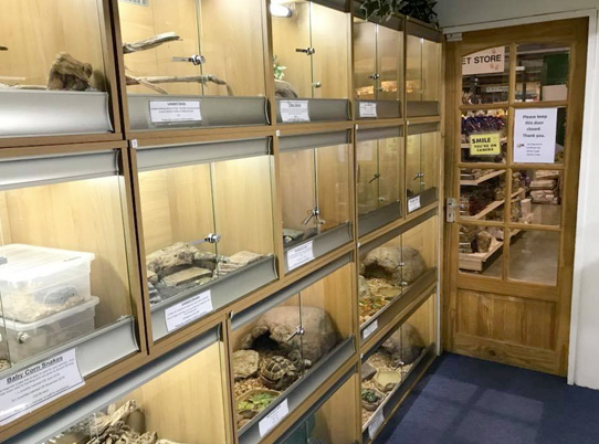 reptiles-for-sale-northamptonshire