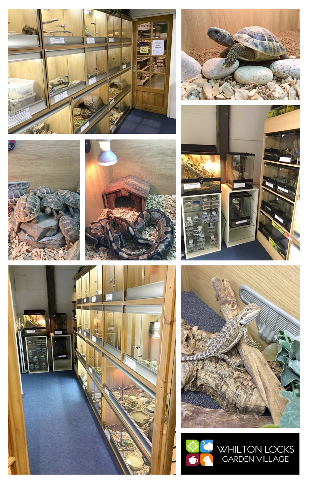 reptiles for sale northamptonshire