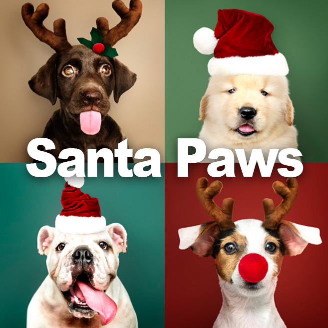 Christmas Event with Dogs